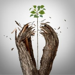 46295054 - breaking through concept as a green sapling growing upward and destroying a tree barrier as a business success metaphor for potential ambition and strong will to succeed.